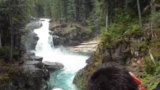 hiking silver falls  trail  /  hot springs mt rainier national park ohanapecosh campground