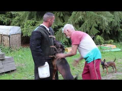 BRAM BRN 25552 KNPV (Peter Sommers)