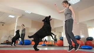 Скачать Become A Dog Trainer CATCH Academy In 20 Seconds