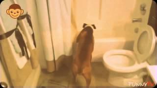 смешные собаки и дети | смешные животные ну очень | смешные истории про кошек(смешные собаки и дети | смешные животные ну очень | смешные истории про кошек смешные собаки и дети | смешные..., 2016-01-09T10:45:21.000Z)