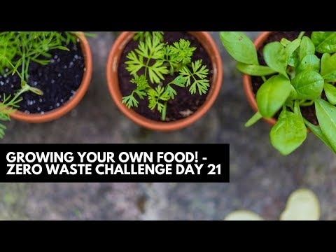 Growing Your Own Food - Zero Waste Challenge | Diana Kitsune
