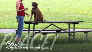 Amazing Transformation Rescue Pup Off Leash K9 Training