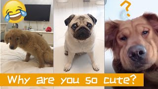 Funny And Cute Animals in Chinese TikTok Vines Compilation 2018 part 23 VERY FUNNY ANIMALS