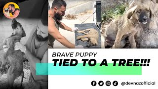 BRAVE PUPPY TIED TO A TREE WATCH WHAT HAPPENS NEXT !!!