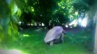 Sexy Beast: Giant Turtles Making Love (Amsterdam ZOO Artis)