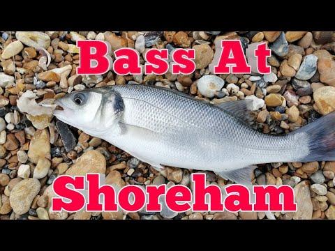 Bass At Shoreham