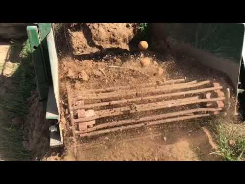 Digging Potatoes with Willsie Digger