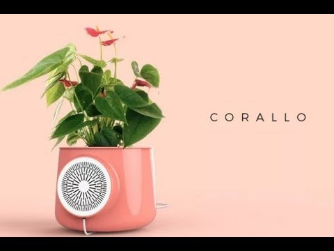 Clairy - Freshen the air in your home with this smart planter