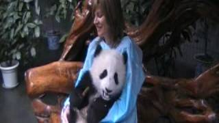 Holding a Baby Giant Panda in Sichuan China