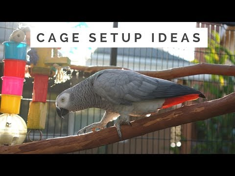 Cage Setup Ideas