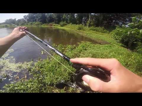 Pond Bass Fishing With Baitmate Live Gamefish Attractant