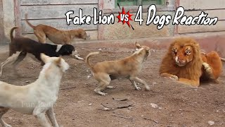 Fake Lion Prank Dog So Funny Can Not Stop Laugh Must Watch New Funny Prank Video 2021