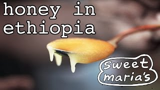Honey in Ethiopia - ማር በኢትዮጵያ