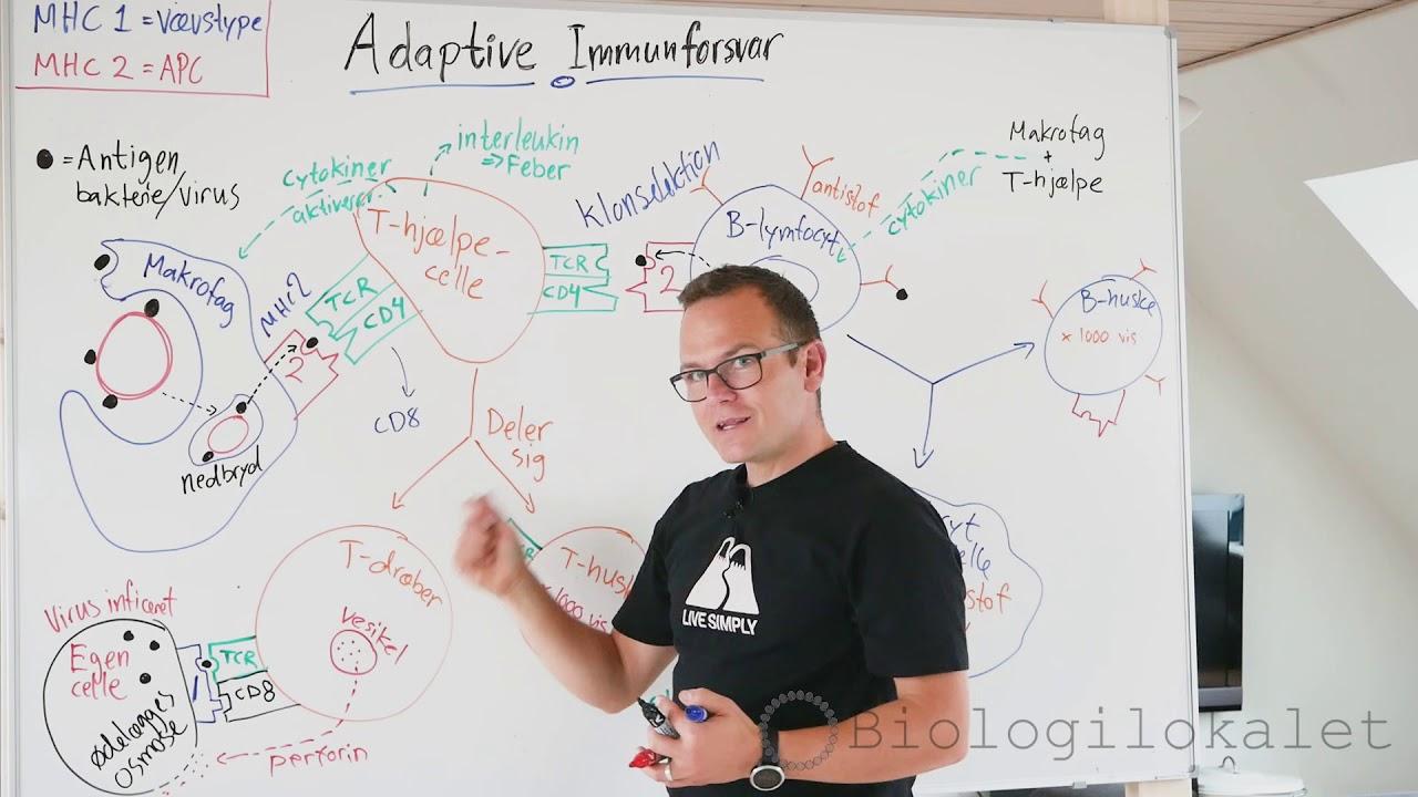 immunforsvar adaptive/erhvervede - biologilærer forklaring