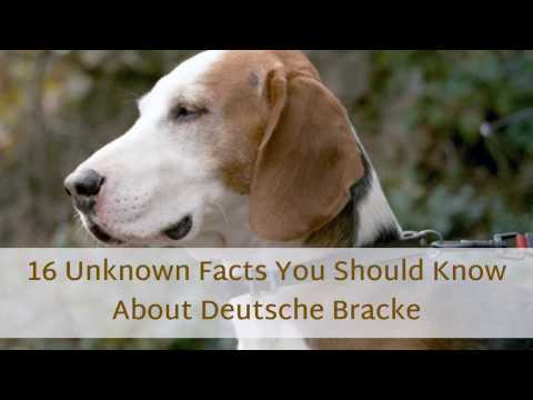 16 Things You Probably Didn't Know About Deutsche Bracke
