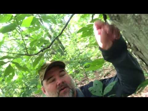 Tips For Early Season Squirrel Hunting