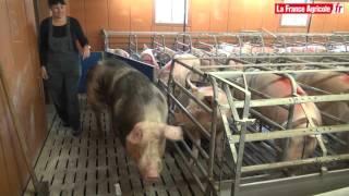 « Je suis chef d'élevage dans une maternité porcine »