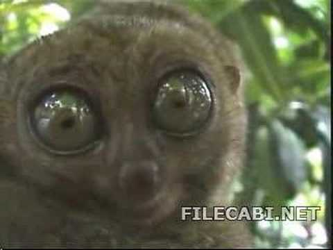 Funny Animal With Big Eyes D