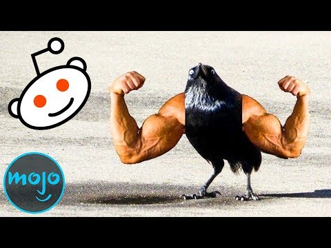 Top 10 Ridiculous Subreddits You Didn't Know Existed