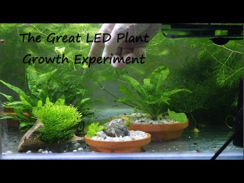 Freshwater LED Plant Growth Experiment