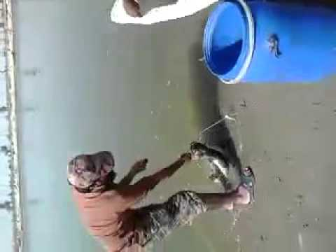 Fishing in Pakistan by aqibkhan 6 rohu 25kg fish