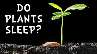 Do Plants Sleep? Science Vlog#3 HooplaKidzLab