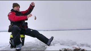 Зимняя Рыбалка на Окуня на Чудском озере. Отличный клев Окуня. Поклёвка за поклёвкой.  Сезон открыт.