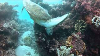 Scuba Dive the Great Barrier Reef - Flynn