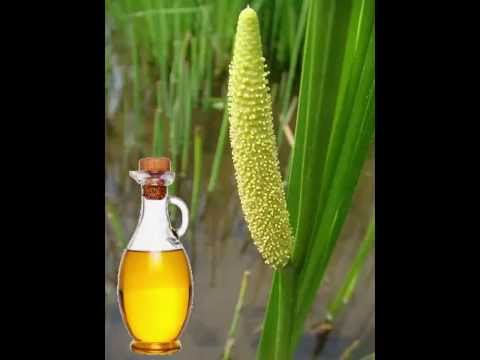 Calamus Oil Health Benefits