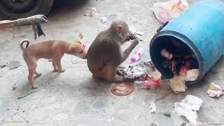 Funny dog monkey