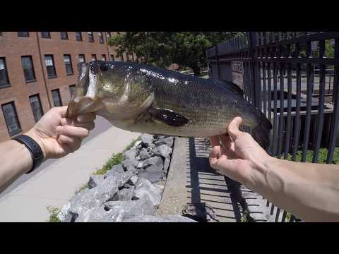 "Charles River ""Punching"" for Bass"