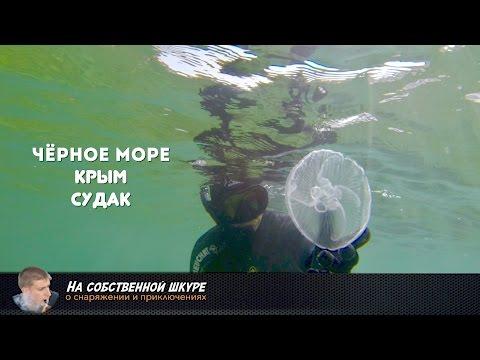 Черное Море. Крым. Судак. Подводный мир