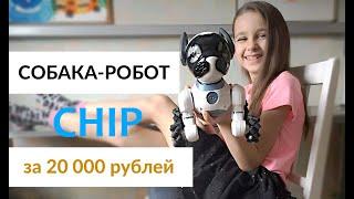 Собака-робот CHIP. Игрушка за 20000 рублей! РАСПАКОВКА и обзор. Подарок на день рождения ребенку
