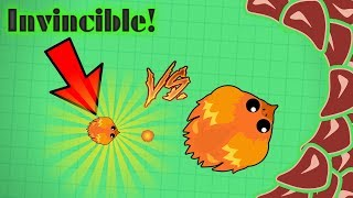 Mope.io Invincible Animals Glitch on Beta!! Tiny Invincible Phoenix Vs. Huge 2.5M Phoenix!