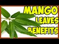These 10 Medicinal Properties Of Mango Leaves Will Amaze You!