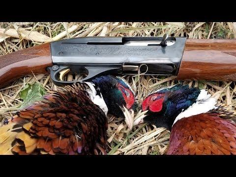 Pheasant Hunting Public Land 2017