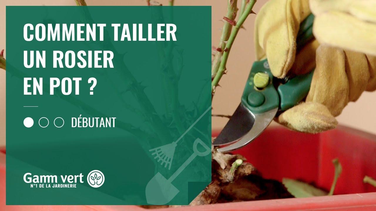 Quand Et Comment Tailler Un Rosier [tuto] comment tailler un rosier en pot ? – jardinerie gamm vert