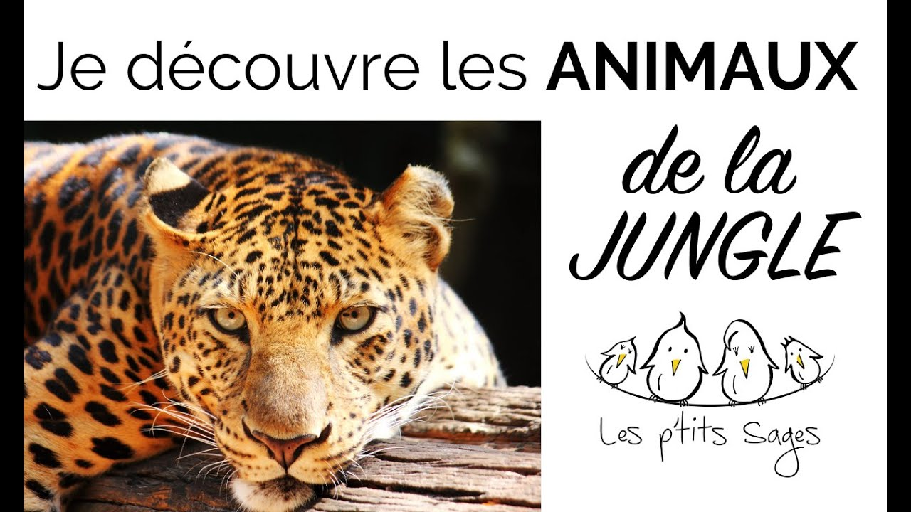Animaux 4 je d couvre les animaux de la jungle youtube - Decoration animaux de la jungle ...