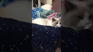 なぜかバスタオルでコーフンするネコさん。