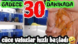 aquarium cleaning, aquarium fish, Fish species,cichlid birth,Cichlid Aquarium,cichlid aquarium,