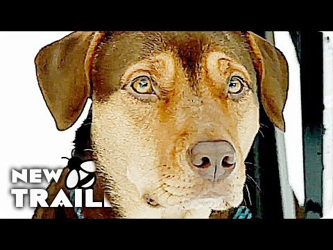 A DOG'S WAY HOME Trailer (2019) A Dogs Purpose Follow Up