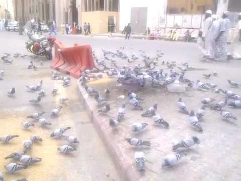 kabooter chok in HOLLY MAKKAH