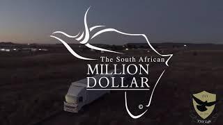Million Dollar Pigeon Race Final 2018