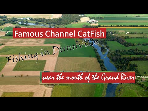 Channel Catfish: Fishing In Dunnville, Ontario