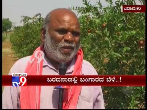 Yadgir: Drought Hit Farmers Finds Success in 'Pomegranate Farming'