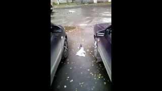 Прикол голубь ходит с пакетом