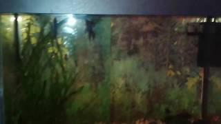 Кошара залез в аквариум с водой, кот веган животные