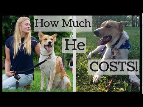 How Much A Dog REALLY Costs