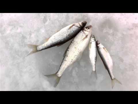 мормышки для зимней рыбалки на ельца