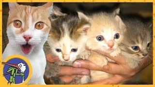 У котика Рыжика появились братья и сестры. Кошка родила котят на чердаке. Кому нужны котята?